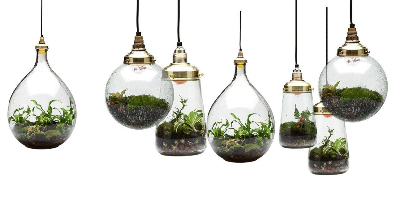 L 39 objet d co ultime un terrarium illumin ma plante - Plante verte en bocal ...