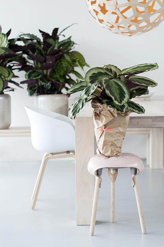 Un petit cadeau pour votre plante sitter ma plante mon for Entretien jacinthe interieur