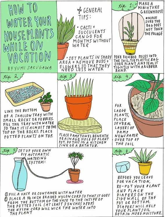 Les Vacances Que Faire Avec Les Plantes Ma Plante