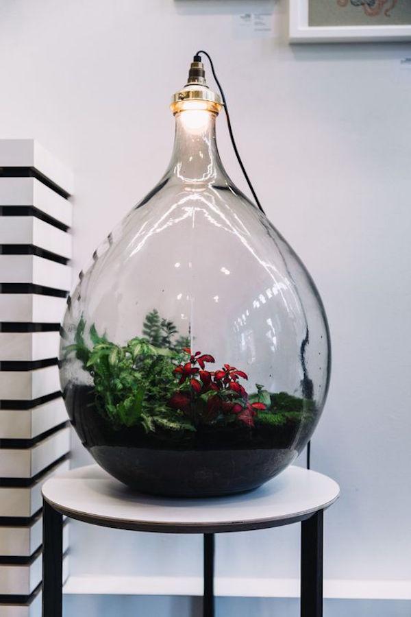 L 39 objet d co ultime un terrarium illumin ma plante mon bonheur - Cactus porte bonheur ...