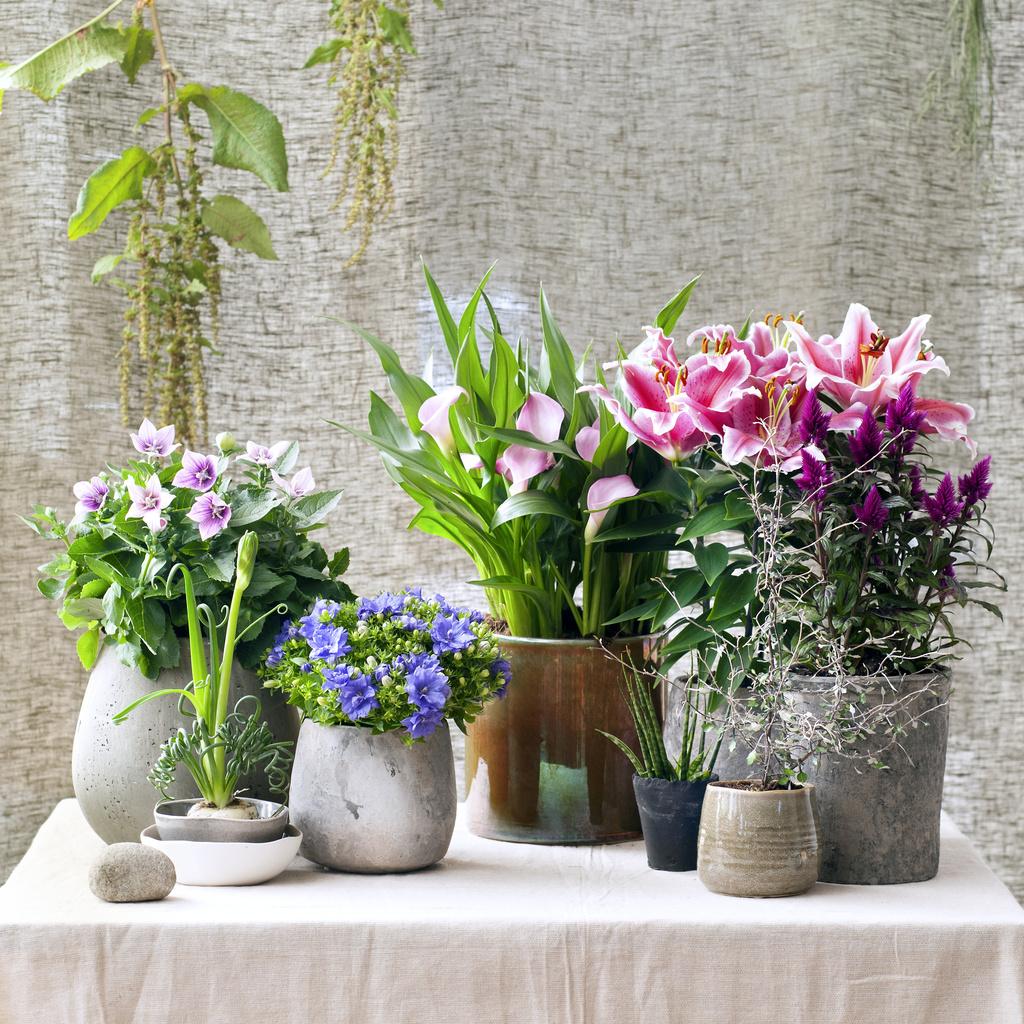 gagnez 3 plantes vice versa offrir pour la f te de m res ma plante mon bonheur. Black Bedroom Furniture Sets. Home Design Ideas