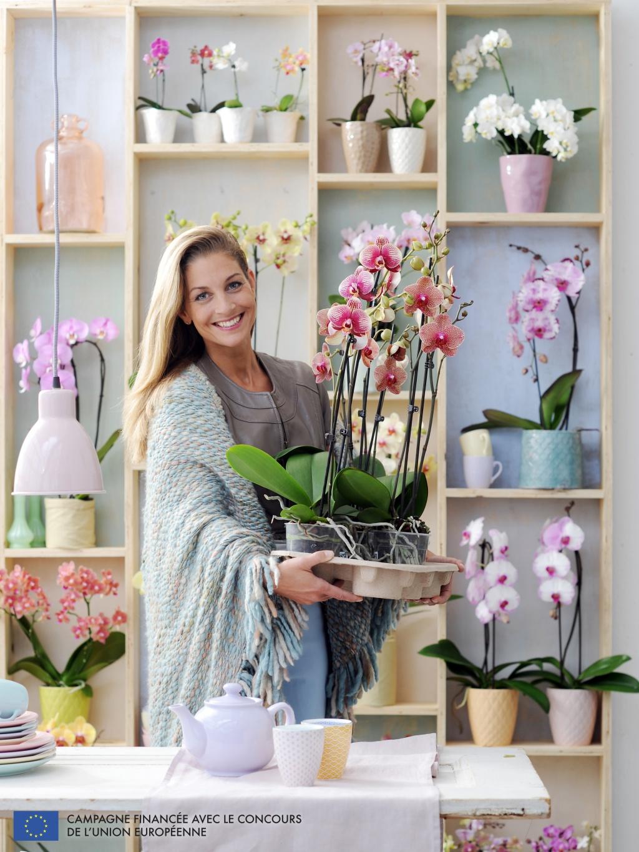 Chaque mois sa plante en d cembre le phalaenopsis ma plante mon bonheur - Cactus porte bonheur ...