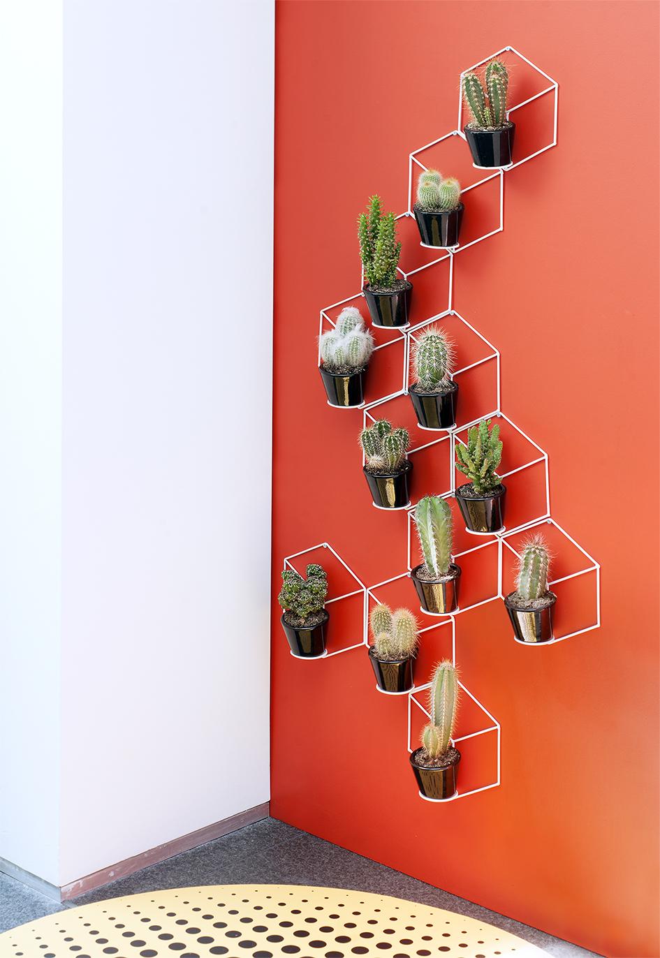 Le cactus ma plante mon bonheur - Cactus porte bonheur ...