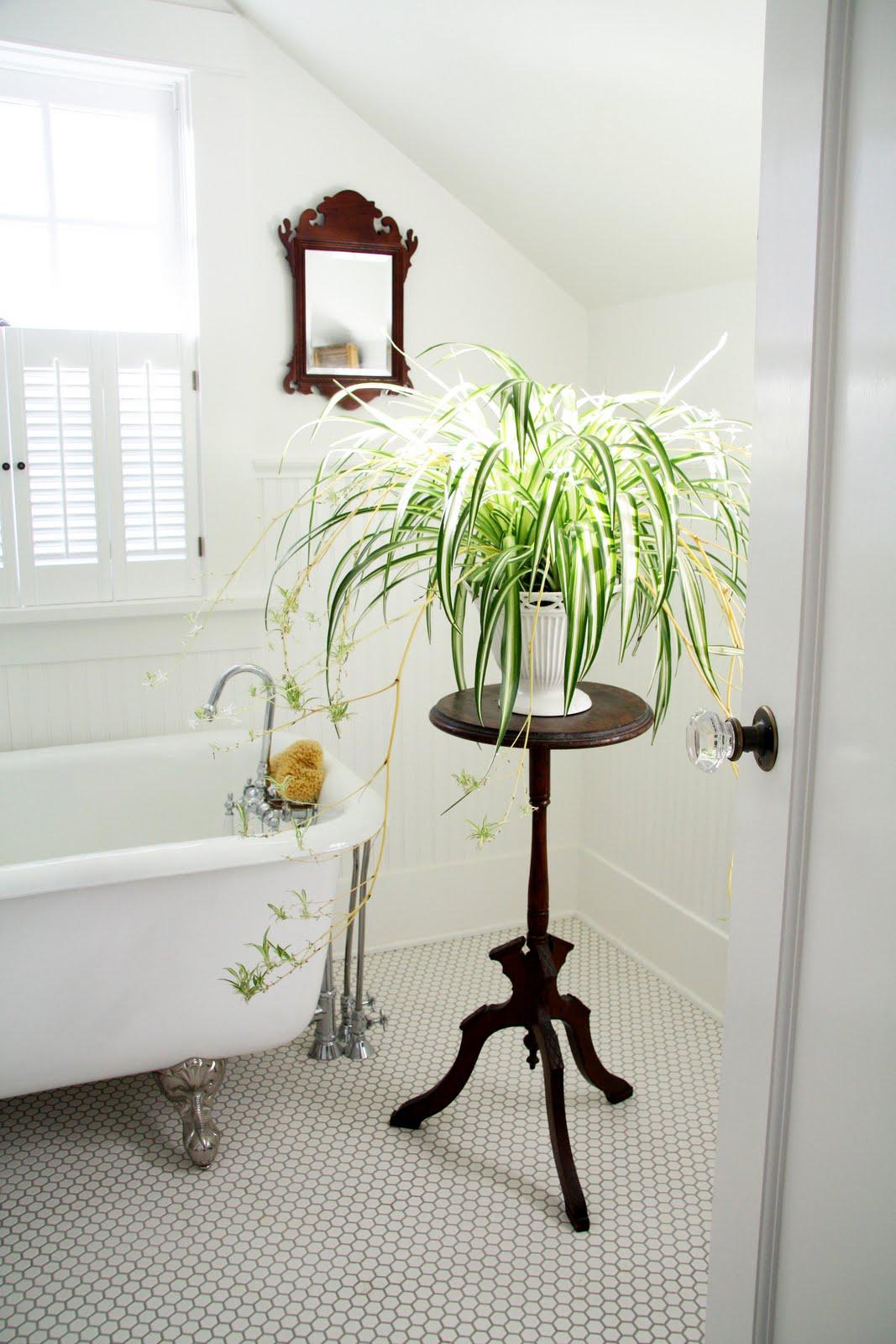 une serre de bain ma plante mon bonheur. Black Bedroom Furniture Sets. Home Design Ideas