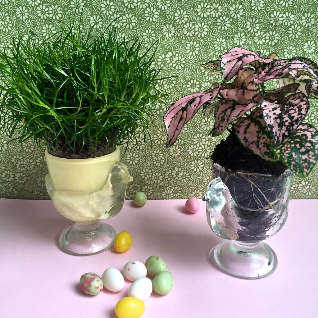 des coquetiers plantes ma plante mon bonheur. Black Bedroom Furniture Sets. Home Design Ideas