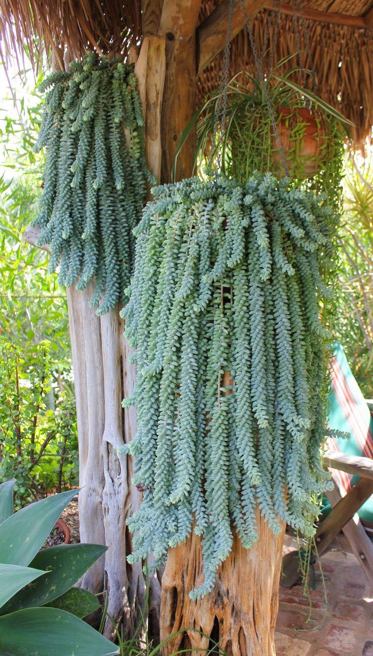 Tellement s dum ma plante mon bonheur - Cactus porte bonheur ...