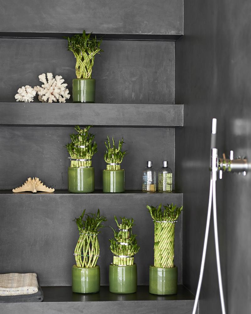 le bambou porte bonheur ma plante mon bonheur. Black Bedroom Furniture Sets. Home Design Ideas