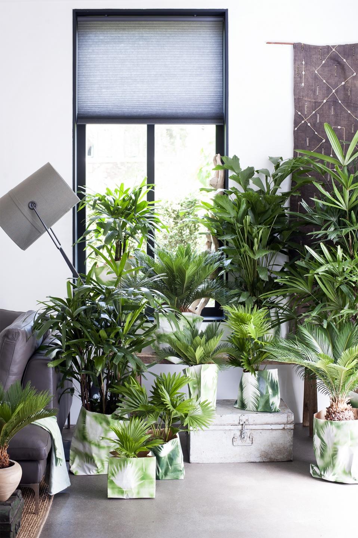 Transformez votre plante en cosyst me miniature ma plante mon bonheur - Cactus porte bonheur ...