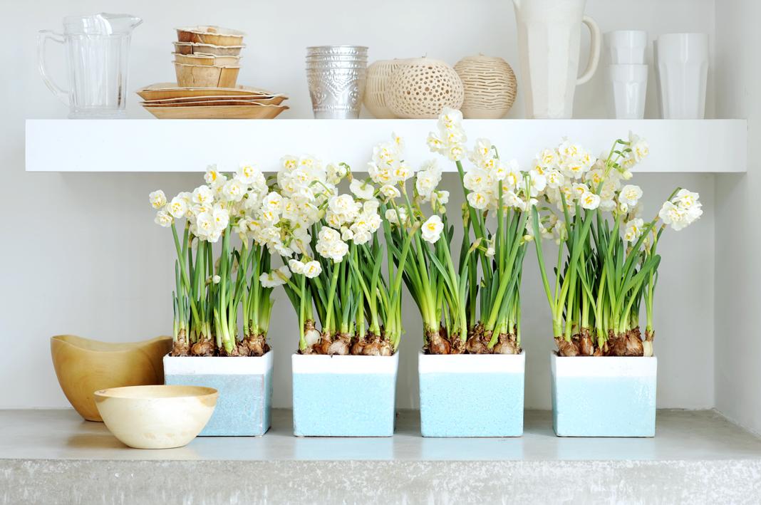 Cinq conseils pour soigner vos bulbes en pot ma plante for Entretien jacinthe interieur