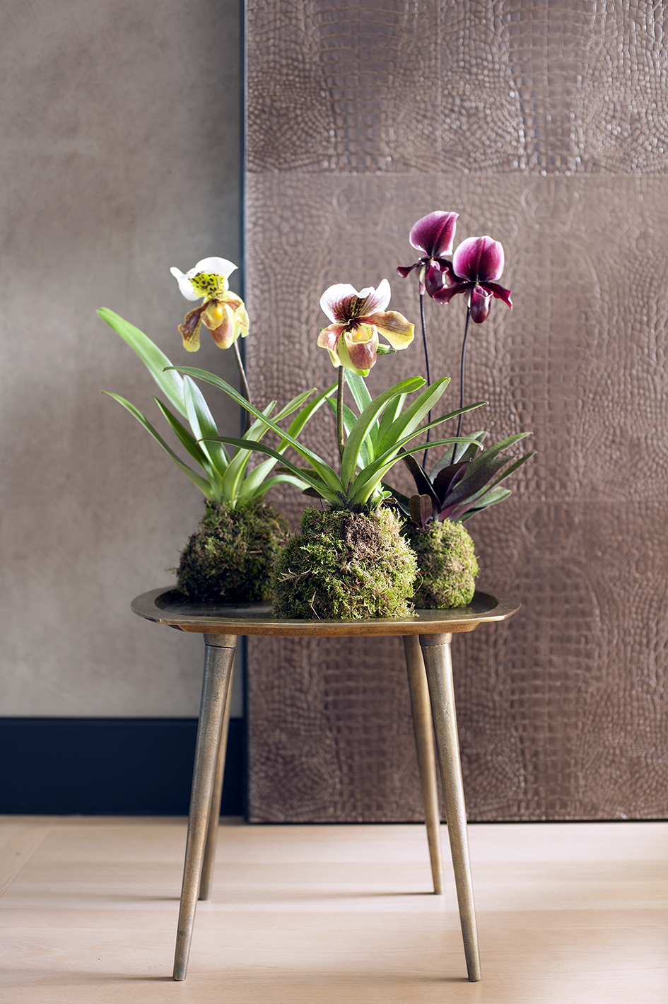 diy kokedama avec des orchid es d exception ma plante mon bonheur. Black Bedroom Furniture Sets. Home Design Ideas