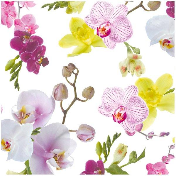 Emball avec l orchid e ma plante mon bonheur - Arrosage orchidee d interieur ...