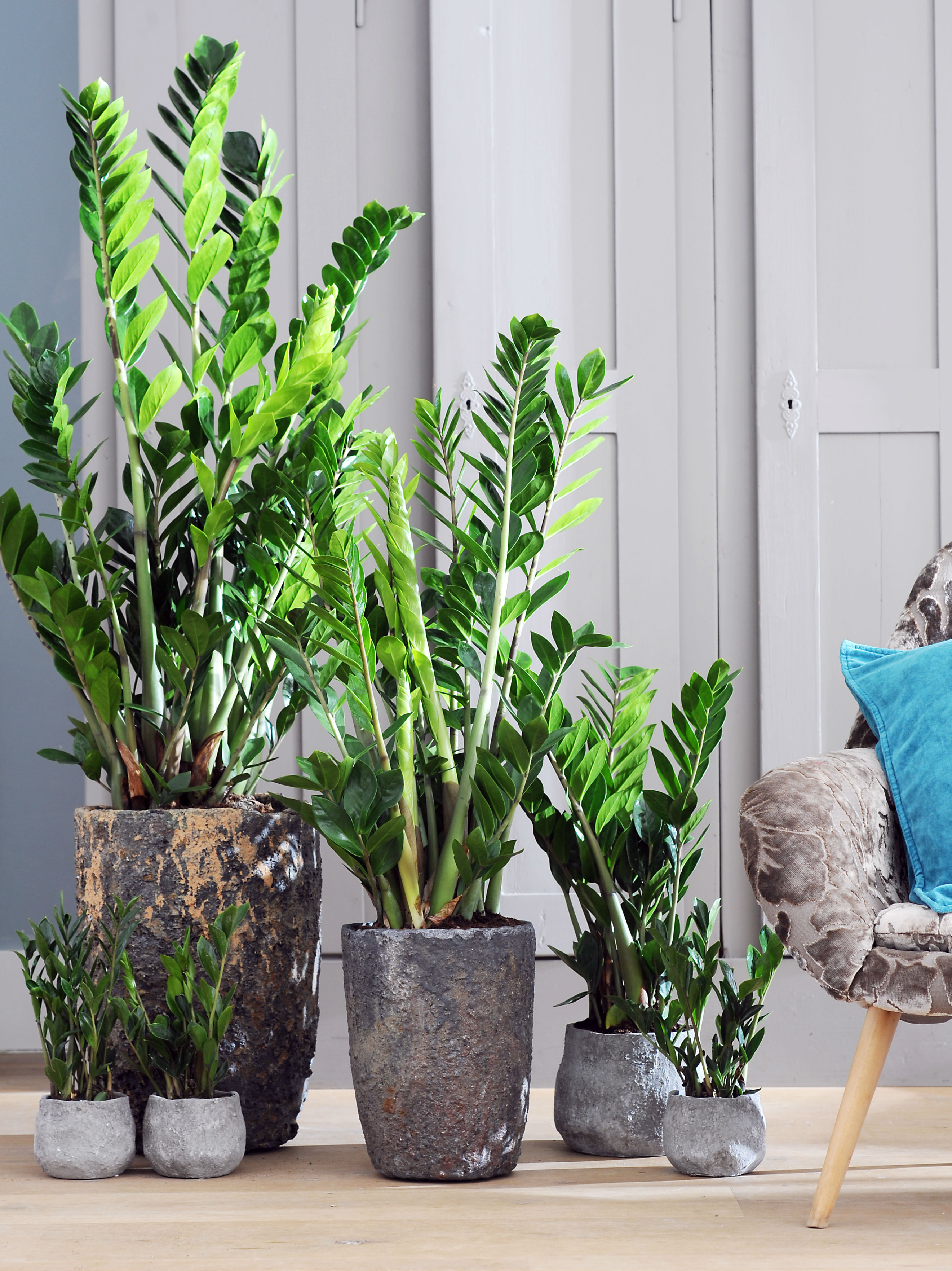 Le pot parfait pour votre plante ma plante mon bonheur for Entretien jacinthe interieur