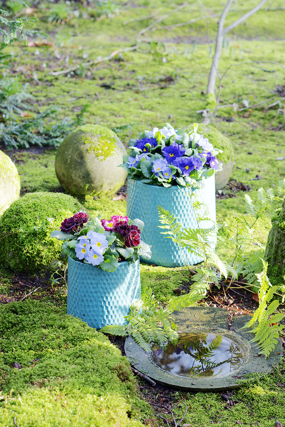 La primev re des jardins ma plante mon bonheur - Cactus porte bonheur ...
