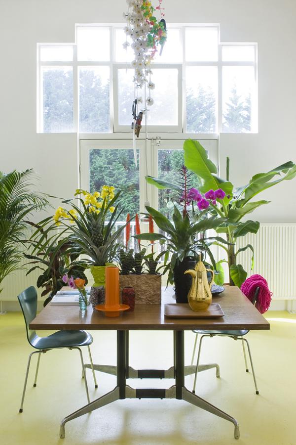 Plant swap party ma plante mon bonheur - Cactus porte bonheur ...