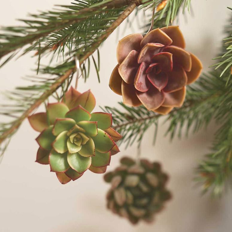 Les succulentes de no l ma plante mon bonheur - Cactus porte bonheur ...