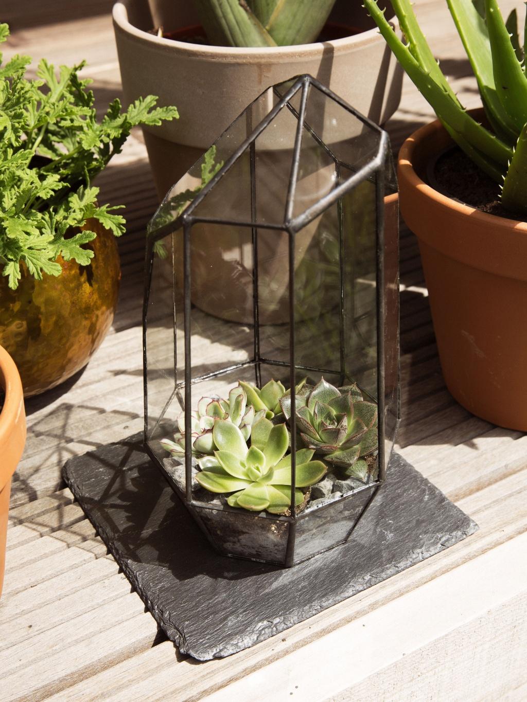L ultime objet d co vert urban jungles ma plante mon bonheur - Cactus porte bonheur ...