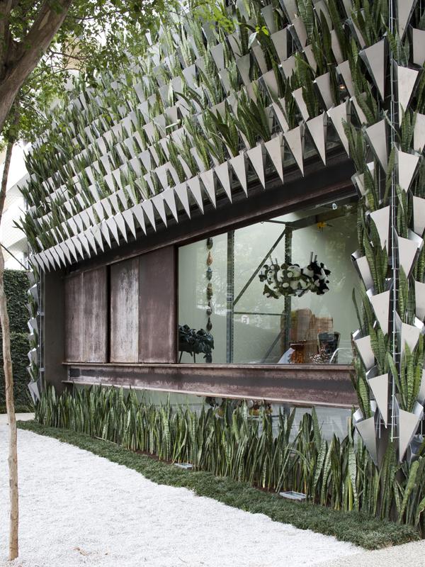 une maison faite de sansevierias ma plante mon bonheur. Black Bedroom Furniture Sets. Home Design Ideas