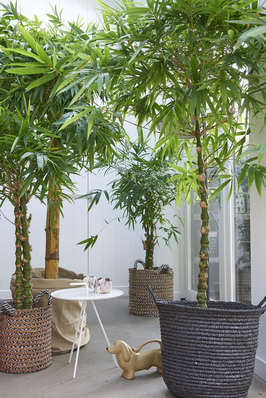 Le bambou ma plante mon bonheur - Cactus porte bonheur ...