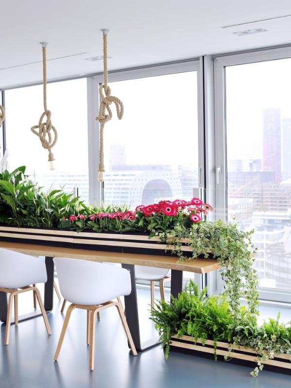 5 conseils pratiques pour une maison plus belle et plus saine ma plante mon bonheur. Black Bedroom Furniture Sets. Home Design Ideas