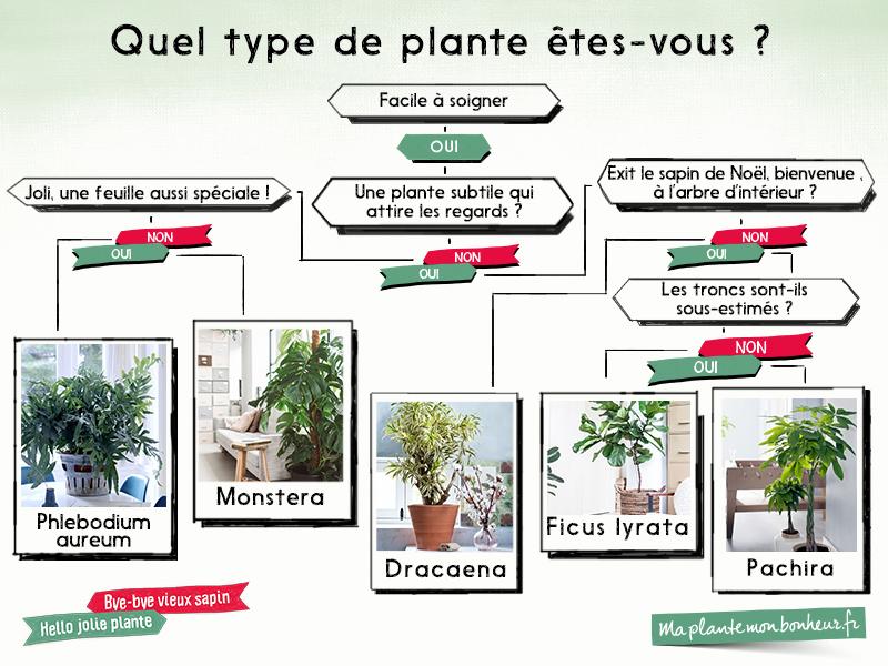 Quel type de plante tes vous ma plante mon bonheur for Type de plante