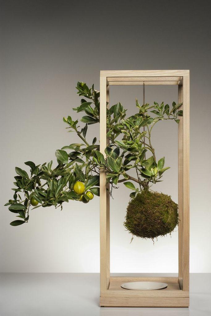 le kokedama les plantes suspendues ma plante mon bonheur. Black Bedroom Furniture Sets. Home Design Ideas