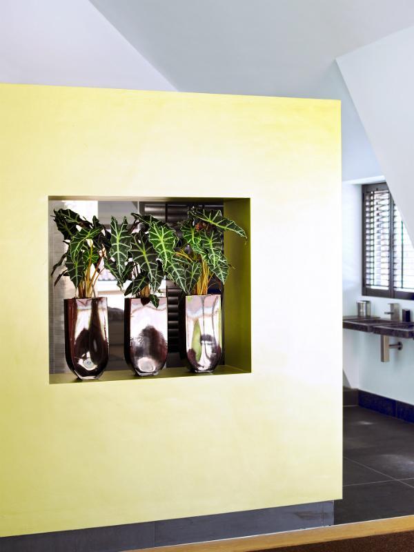 Un intérieur équilibré avec l'Alocasia Maplantemonbonheur.fr