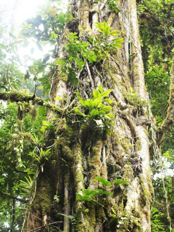 La flore unique du Costa Rica Maplantemonbonheur.fr