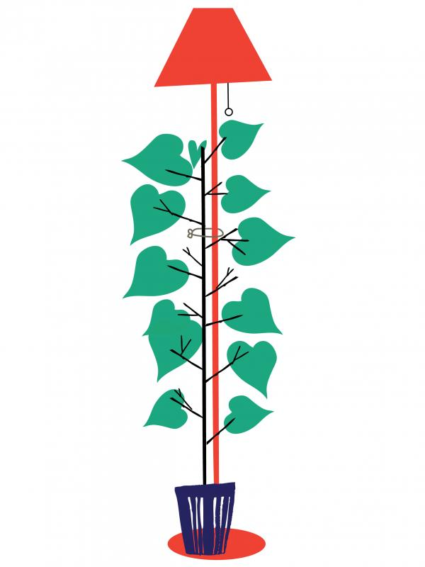 le soins des plantes