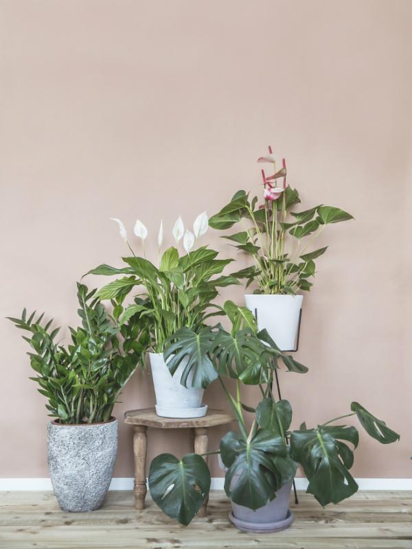 Une plante de famille, pour une mère de famille _ Maplantemonbonheur.fr
