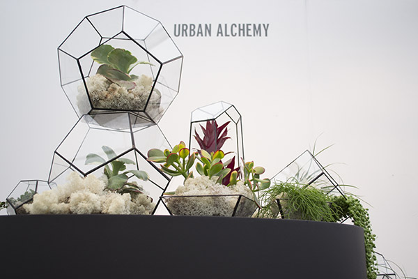 terrarium gemme que j aime ma plante mon bonheur. Black Bedroom Furniture Sets. Home Design Ideas